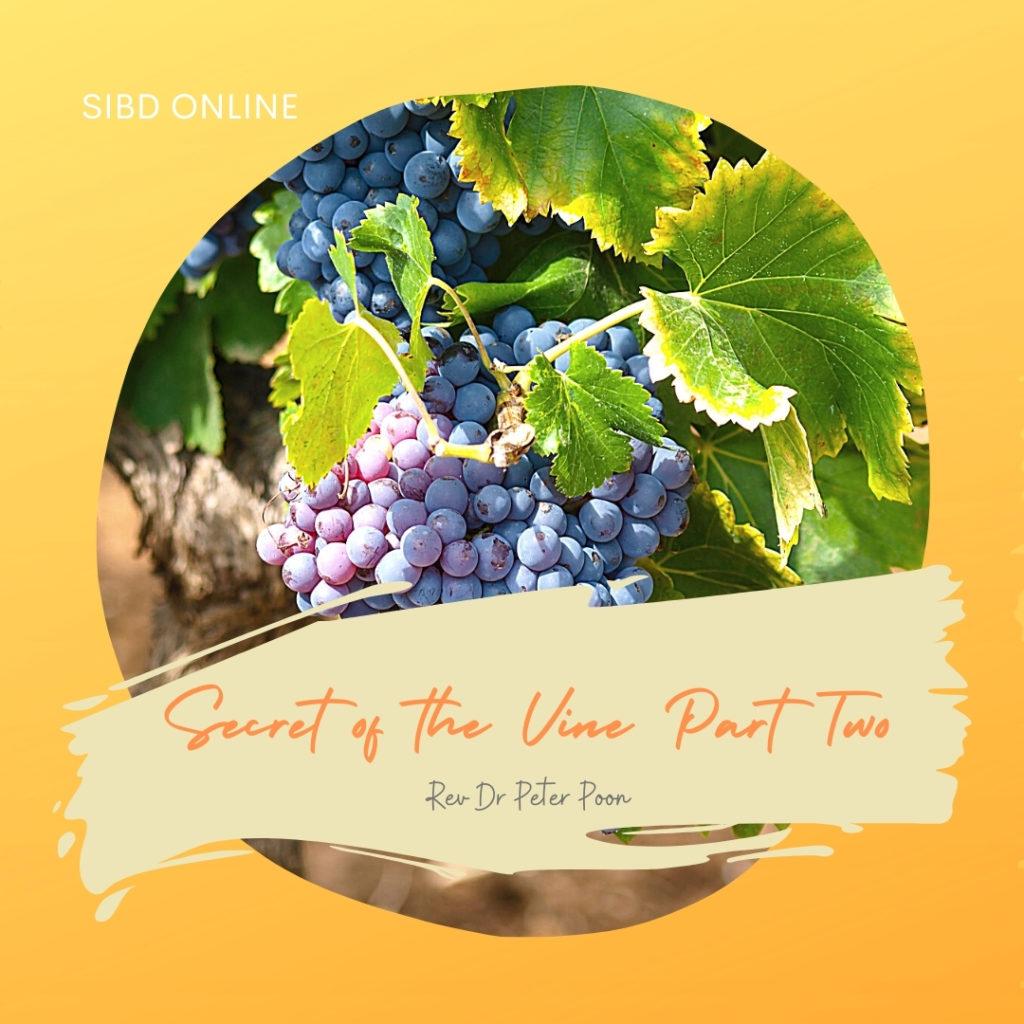 Secrets of The Vine Part 2