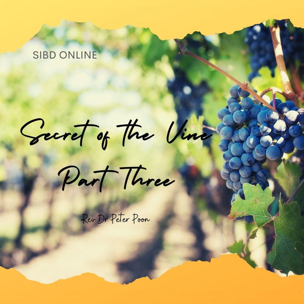 Secrets of The Vine Part 3