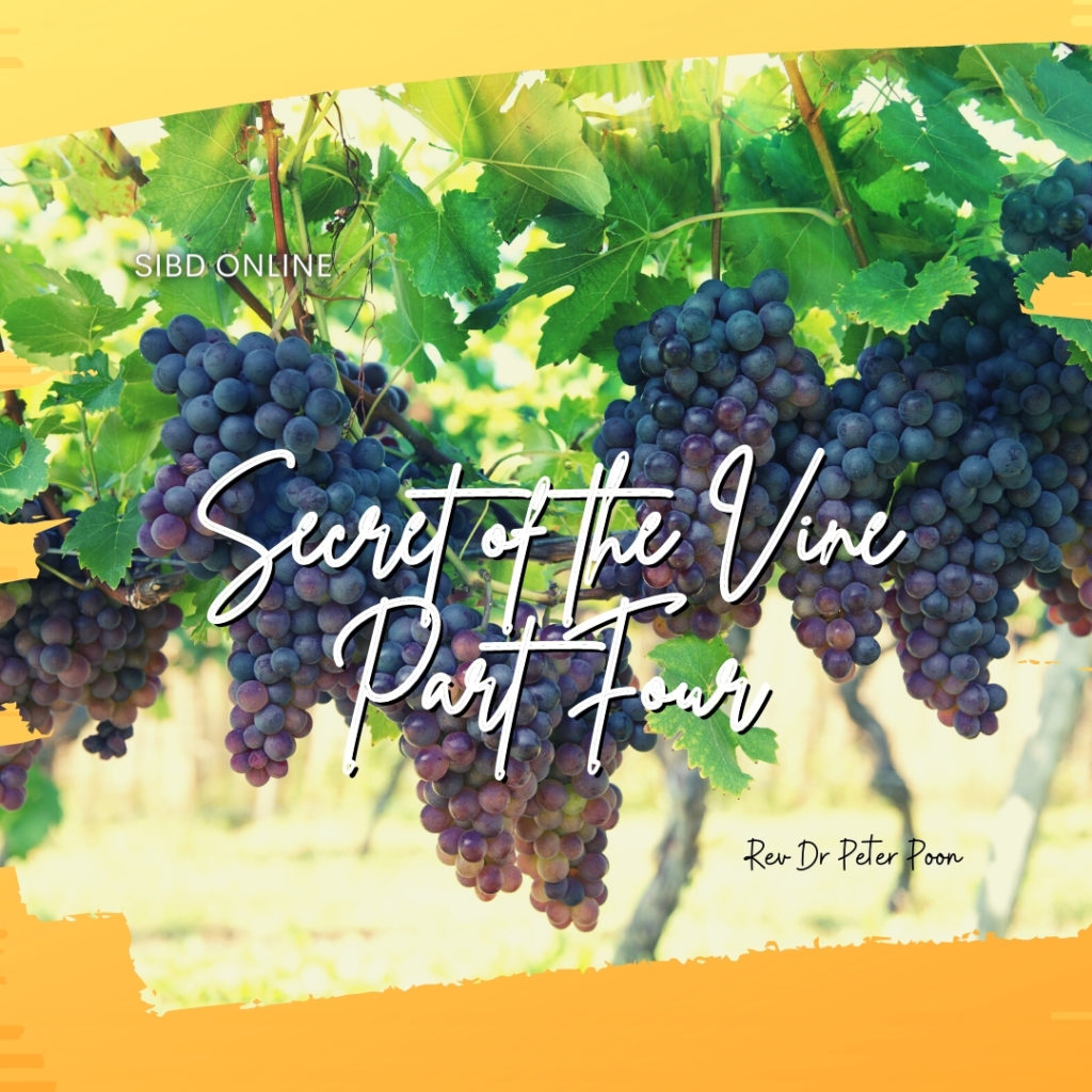 Secrets of The Vine Part 4